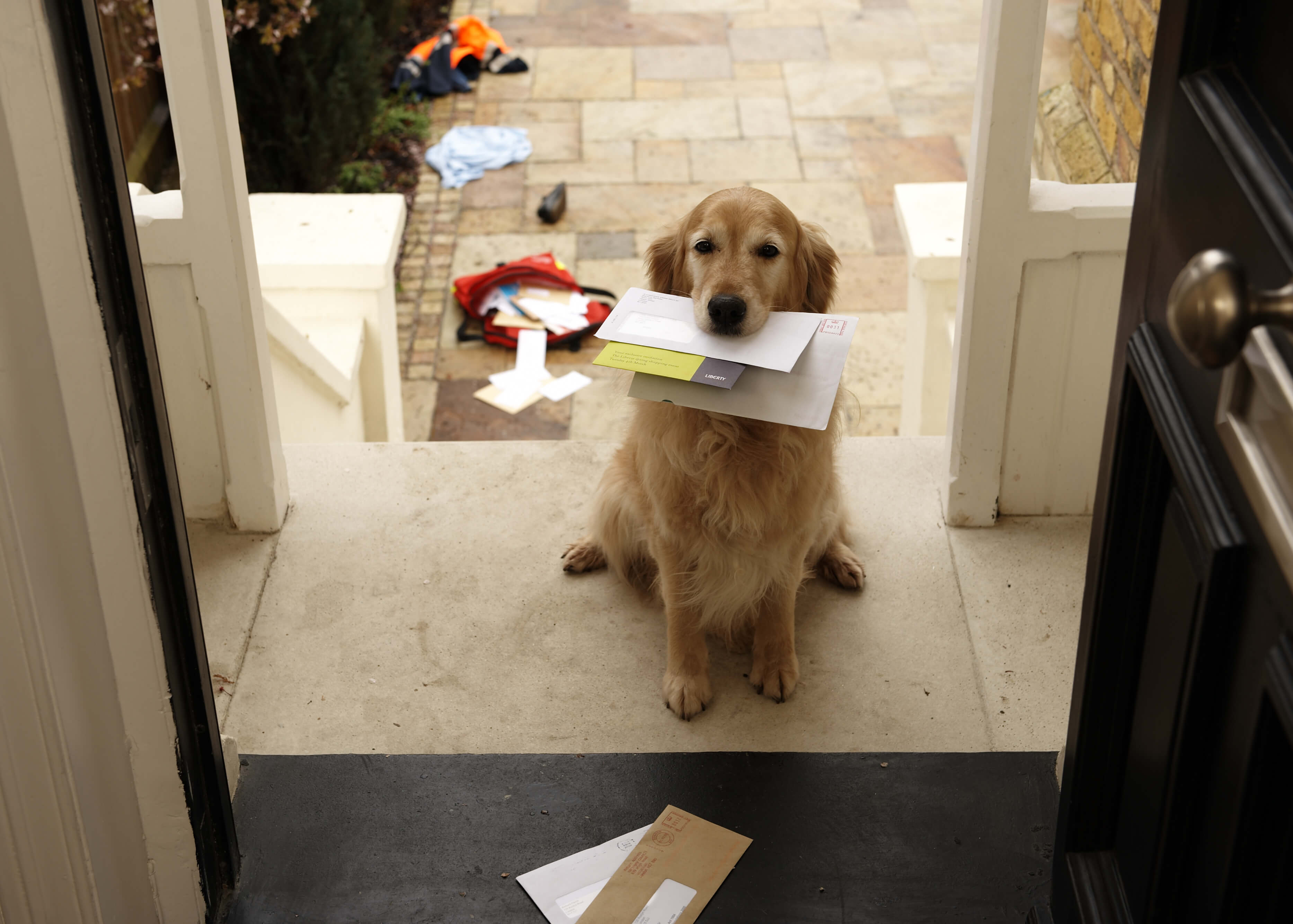 doggymail