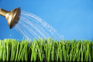 grasswatergrow